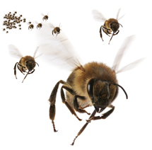 bee_swarm_small.jpg